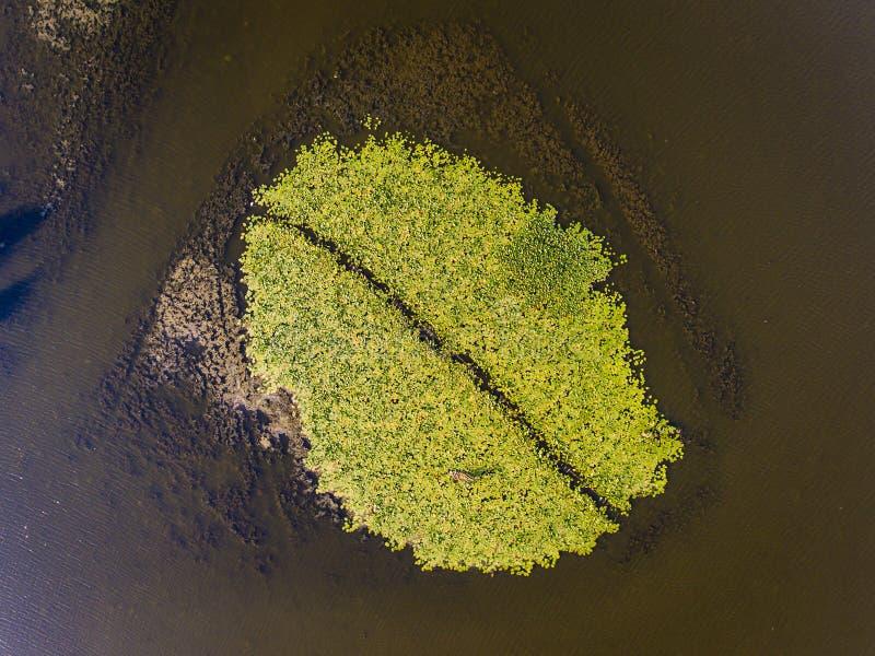 Végétation de delta de Danube comme vu de la vue aérienne ci-dessus image stock