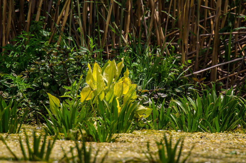 végétation de delta de Danube photo stock