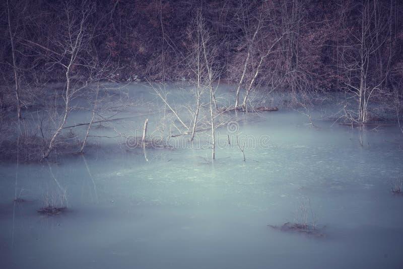 Végétation de massacre de l'eau de cyanure photos libres de droits