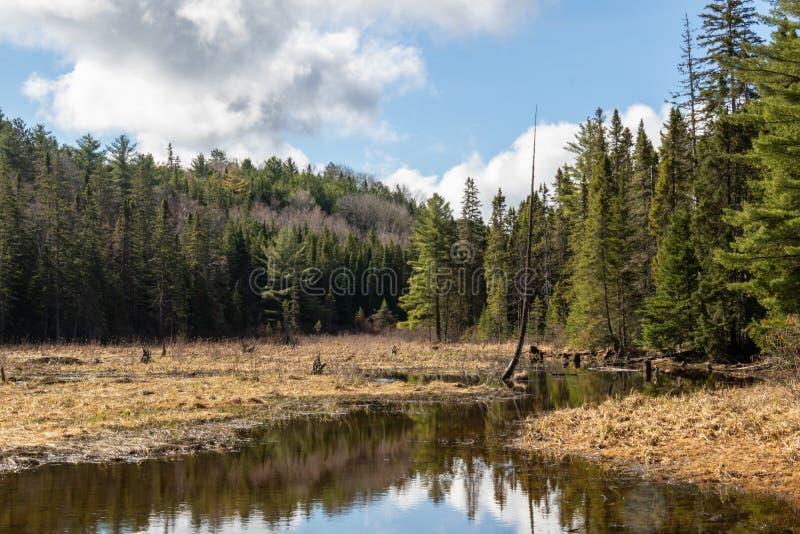 Végétation de ressort sur une crique en parc d'algonquin image stock