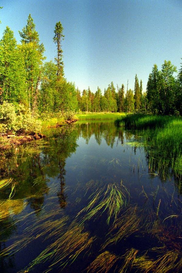 Végétation et eau photo libre de droits