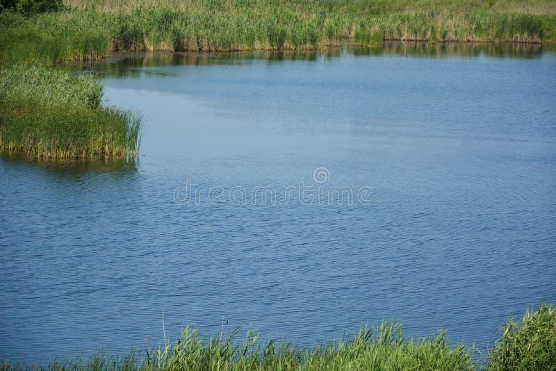 Végétation et eau de delta images libres de droits