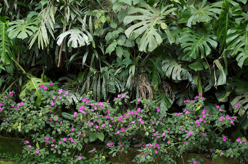 Végétation indigène images libres de droits