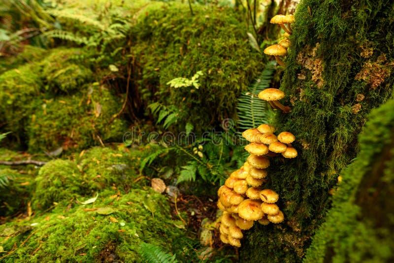 Végétation luxuriante, broussailles épaisses et colonie de champignons sur l'arbre géant photo stock