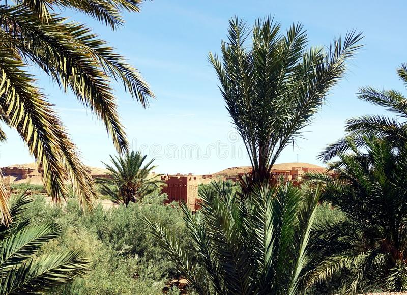 Végétation près de Boumalne Dades, Maroc, Afrique image stock