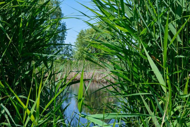 Végétation sauvage dans le delta photographie stock