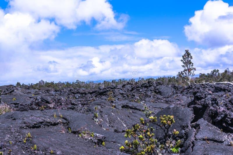 Végétation sur le gisement de lave en grande île, Hawaï photographie stock libre de droits
