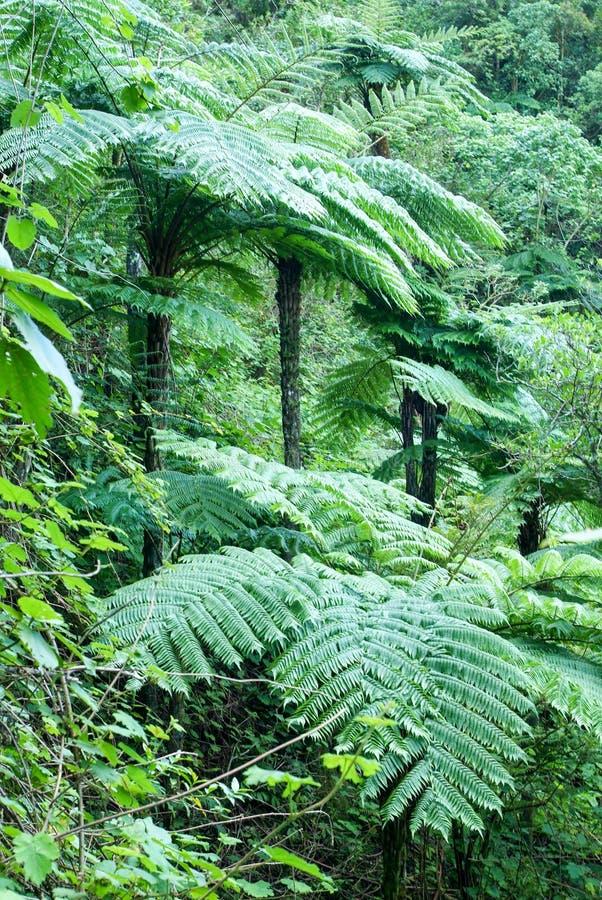 Végétation tropicale en La Reunion Island photographie stock