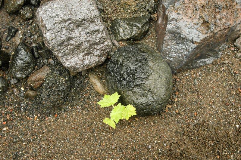 Végétation tropicale en La Reunion Island photos stock