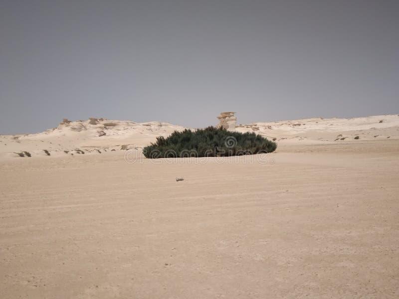 Végétation verte dans le désert du Sahara image libre de droits