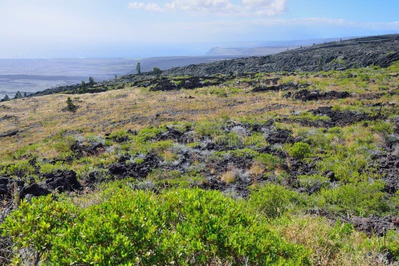 Végétation verte sur un vieux champ d'écoulement de lave par l'océan en parc national de volcans, grande île d'Hawaï photographie stock libre de droits