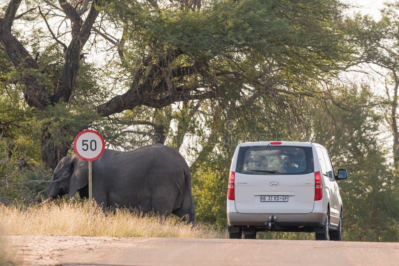 Véhicule passant par un éléphant africain photographie stock libre de droits