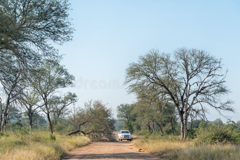 Véhicule passant un arbre renversé par un éléphant images libres de droits