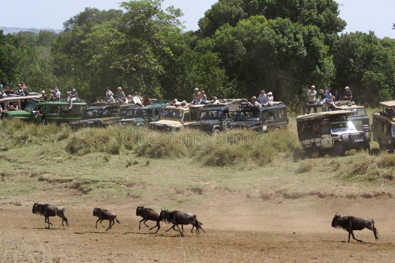 Véhicules de safari au transfert grand, Kenya photos libres de droits