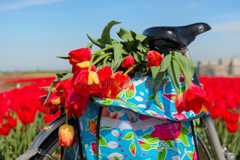 Vélo avec des tulipes image libre de droits