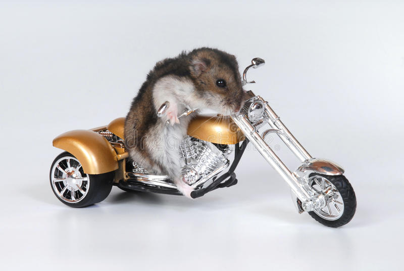 Vélo d'équitation de hamster image libre de droits