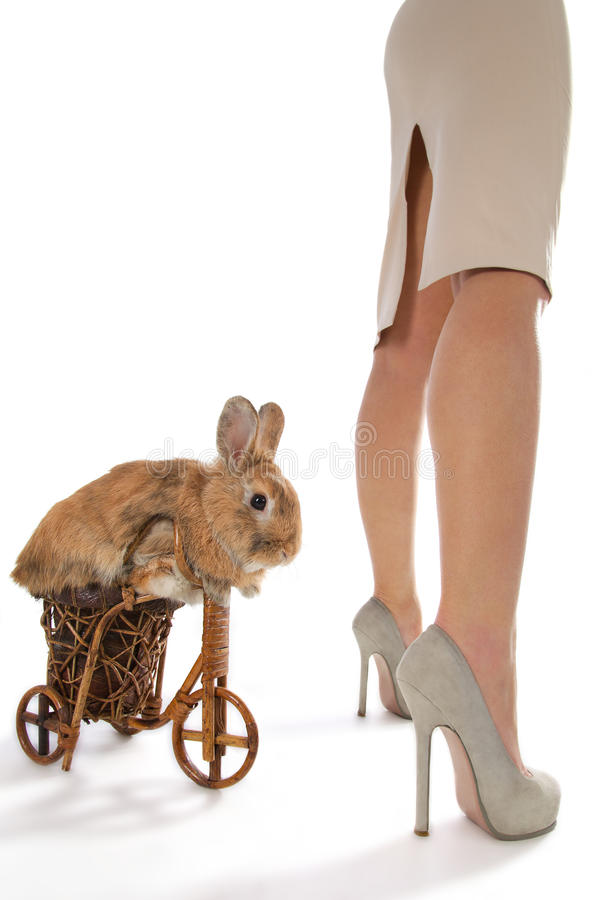 Vélo d'équitation de lapin de Brown photos stock