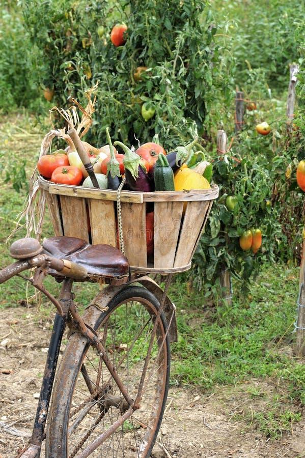Vélo de légumes images libres de droits