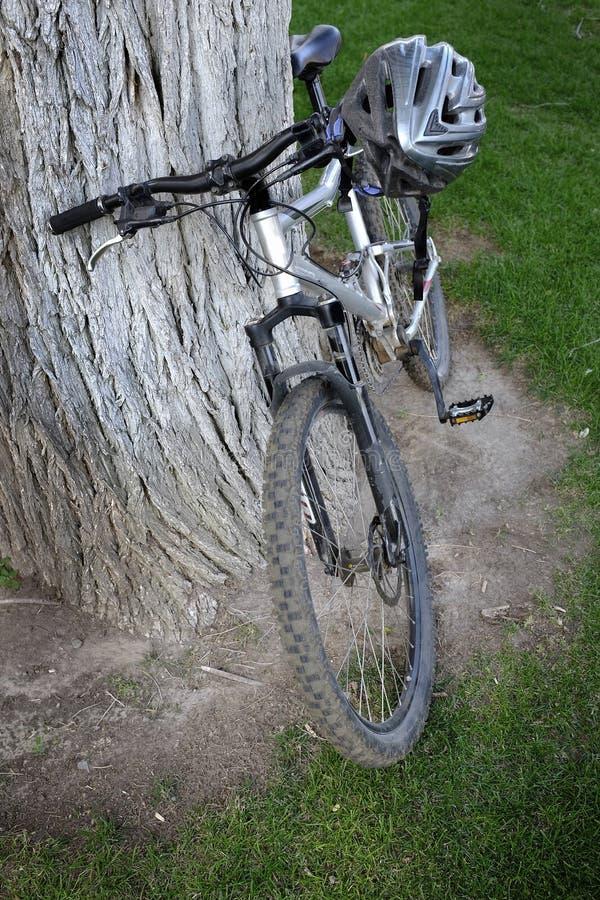 Vélo de montagne contre l'arbre image libre de droits