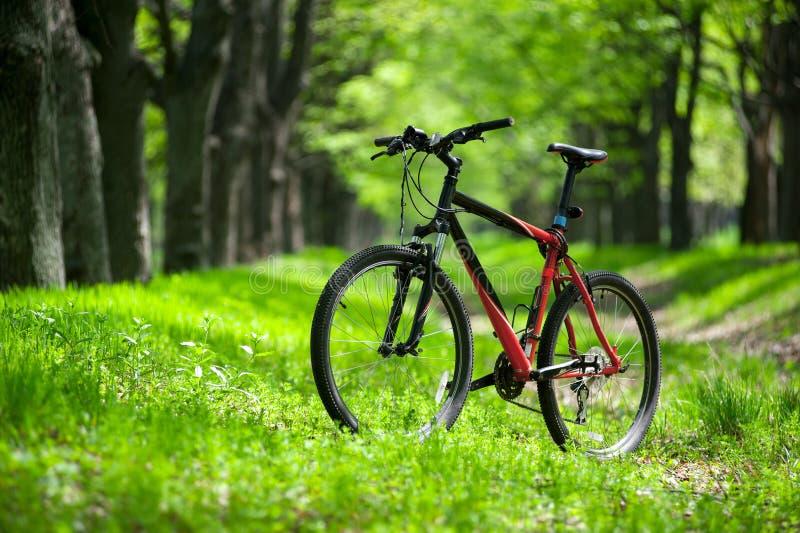 Vélo de montagne sur la traînée dans la forêt image libre de droits
