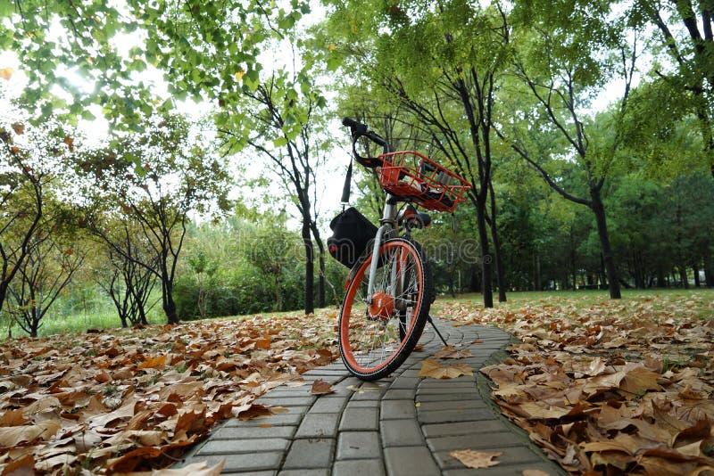 Vélo et route dans la chute image libre de droits