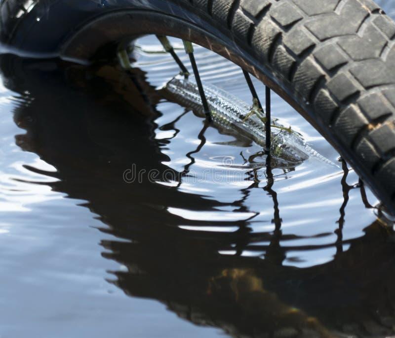 Vélo submergé photo stock