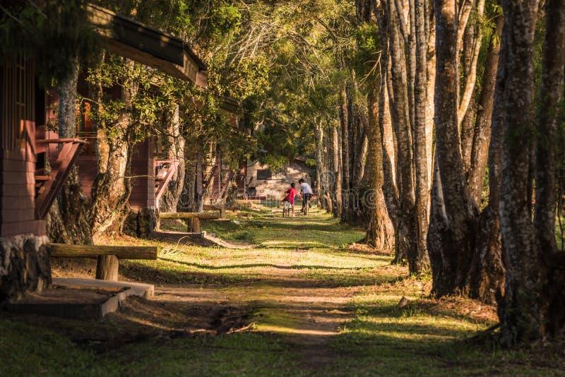 Vélos d'équitation de famille sur le chemin forestier images stock