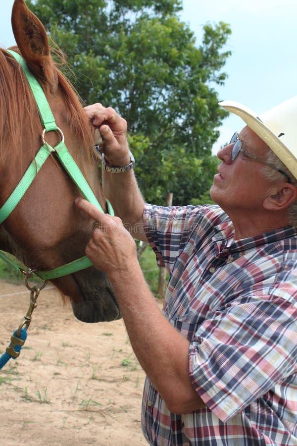 Vérification des yeux de chevaux photo libre de droits