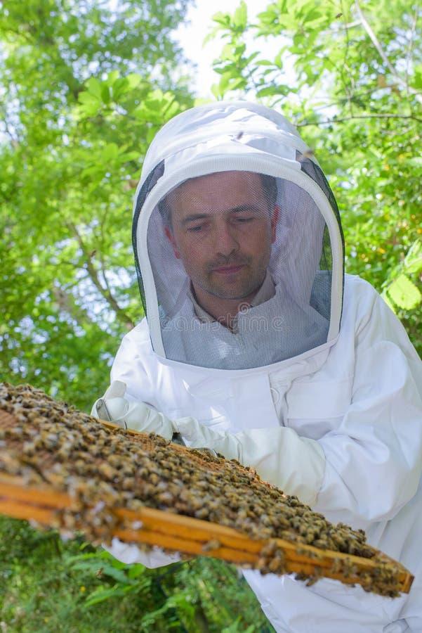 Vérification du cadre de miel photo stock