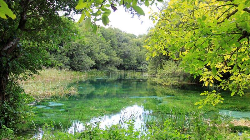 Véritable eau de source naturelle de nature avec le marécage vert photo libre de droits