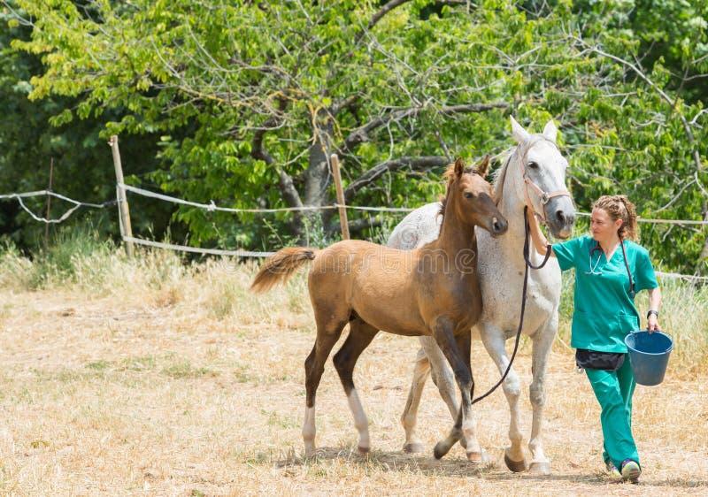 Vétérinaire à une ferme photos stock