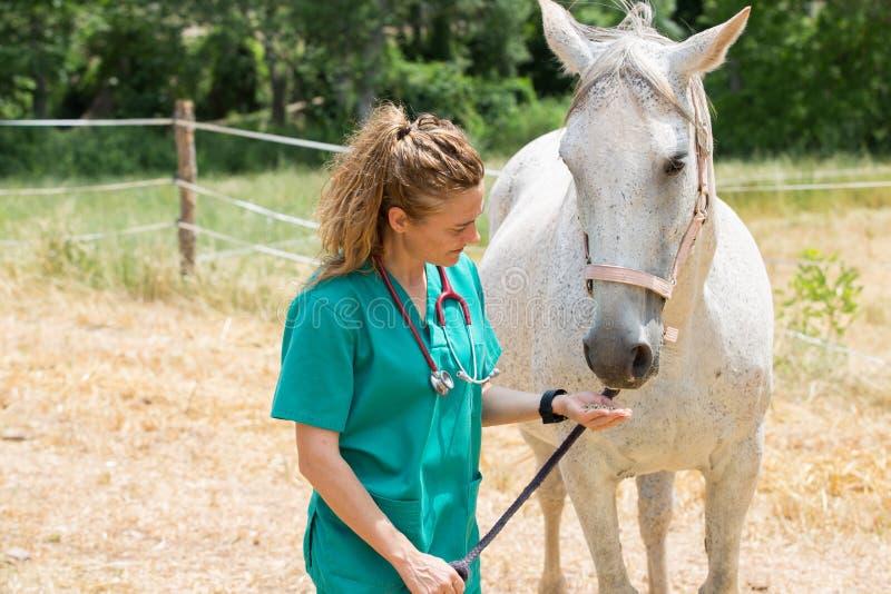 Vétérinaire à une ferme photo stock