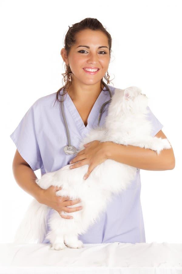 Vétérinaire étreignant le chat blanc d'angora photographie stock libre de droits
