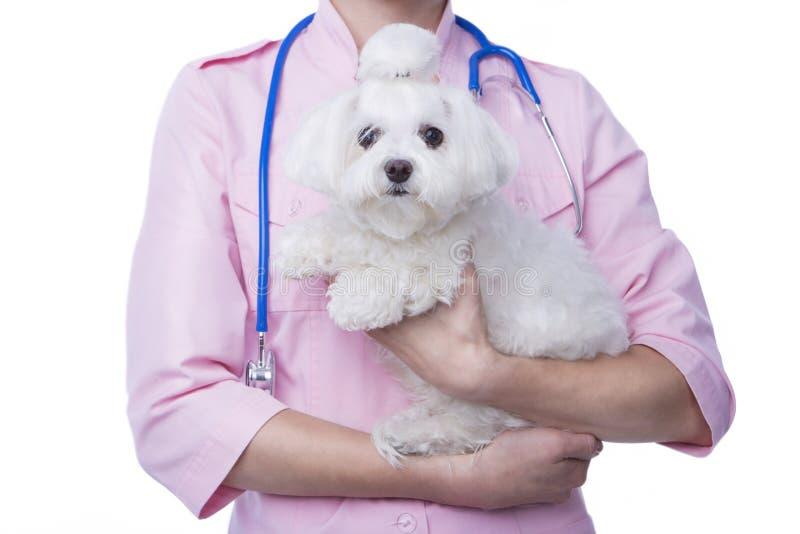 Vétérinaire avec le chien photos libres de droits