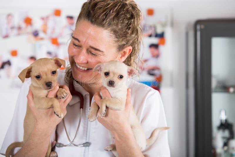 Vétérinaire avec un chiot de chiwawa photographie stock