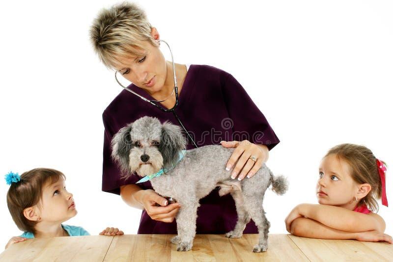 Vétérinaire, crabot et enfants photo libre de droits