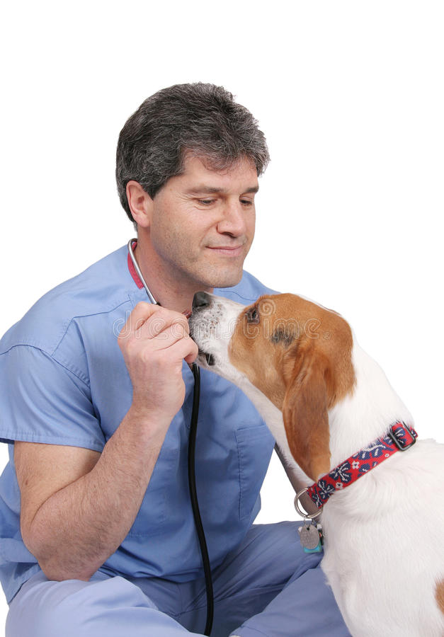 vétérinaire de chiot photos stock