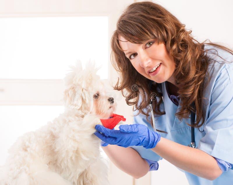 Vétérinaire de femme avec un chien photo stock