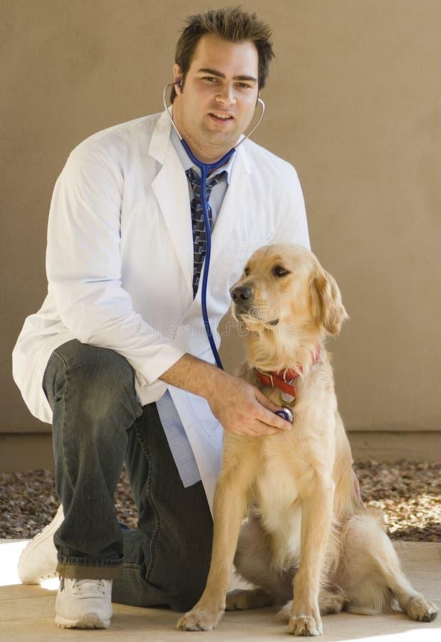 Vétérinaire et chien d'arrêt photos stock