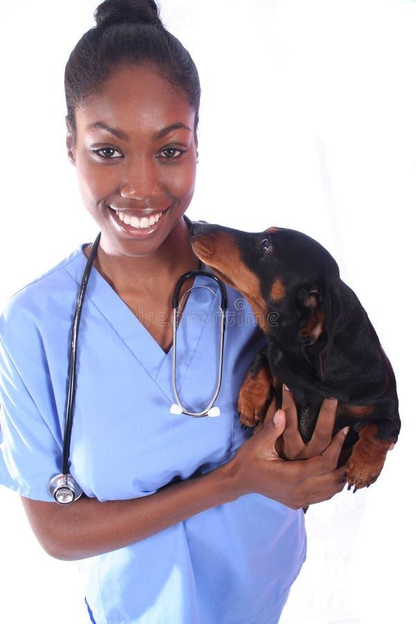 Vétérinaire et crabot photo stock