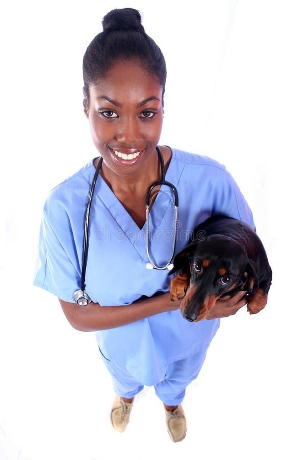 Vétérinaire et crabot photographie stock libre de droits
