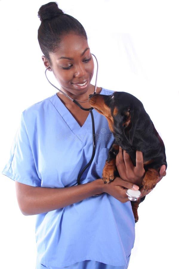 Vétérinaire et crabot images libres de droits