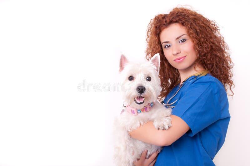 Vétérinaire féminin avec le crabot photographie stock