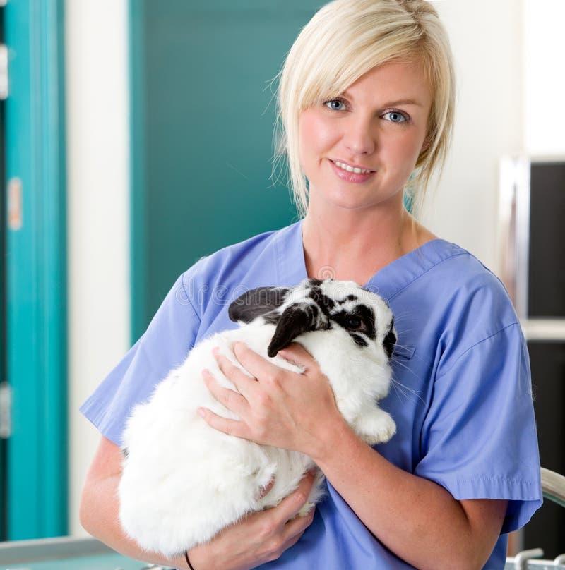 Vétérinaire féminin avec le lapin photographie stock libre de droits