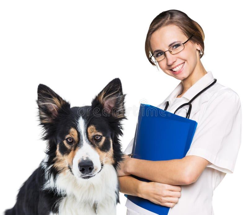 Vétérinaire féminin avec un beau chien image stock
