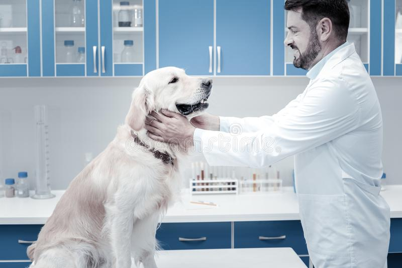 Vétérinaire positif joyeux regardant le chien photographie stock