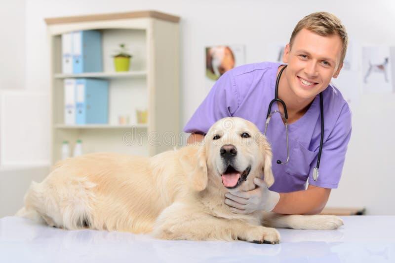 Vétérinaire professionnel examinant un chien photographie stock