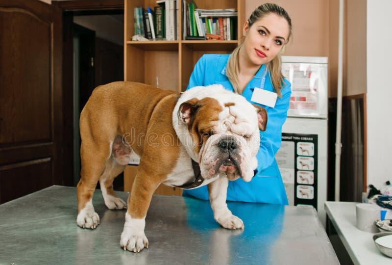 Vétérinaires photo stock