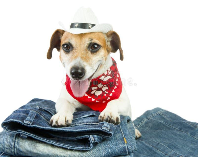 Vêtements de chien photographie stock
