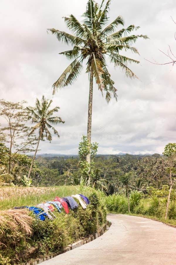Vêtements de séchage sur un gisement de riz Blanchisserie extérieure ville courante de coucher du soleil de forme de bel Indonési photo stock